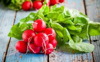 Как правильно выращивать редиску в квартире на подоконнике