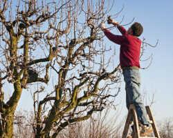 Весенняя обработка садовых деревьев: чем, как и в какой период можно опрыскивать растения