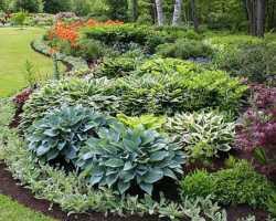 Дизайнерские решения по использованию хост в саду, сочетание растений с другими культурами на клумбе