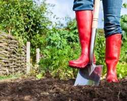 Надо ли тратить силы на перекопку огорода осенью: приводим 5 доводов против