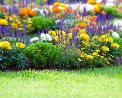 Оформление приусадебного участка цветами, или как достичь гармонии цвета