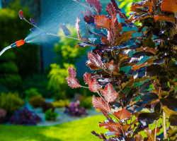 Органическое земледелие: борьба с вредителями растений старинными методами