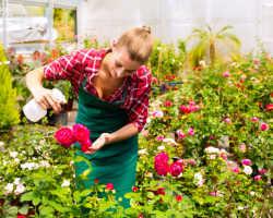 Чем подкормить розы весной и как правильно удобрять цветы?