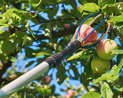 Приспособление для сбора яблок — когда садовод становится инженером