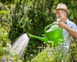 Роковые ошибки: 7 промахов, которые допускают при выращивании растений