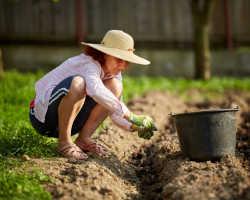 Удобрение для картофеля при посадке весной — делаем правильный выбор