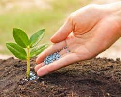 Нормы внесения удобрений для садовых деревьев