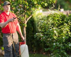 Препараты для обработки сада – как получить правильный урожай