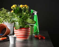 Всего 7 приемов, чтобы комнатные цветы росли как на дрожжах