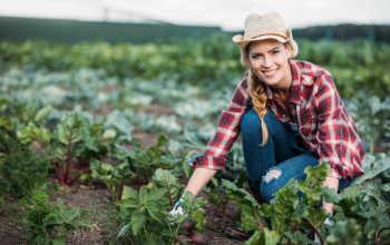 Подзимняя посадка свеклы для получения богатого урожая