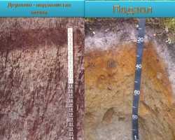 Дерново-подзолистые почвы — головная боль дачника