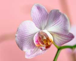Правила выращивания орхидей