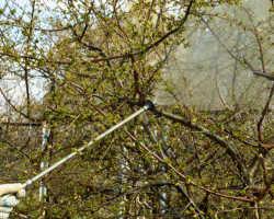 Болезни деревьев и их лечение — лучшие способы спасти сад