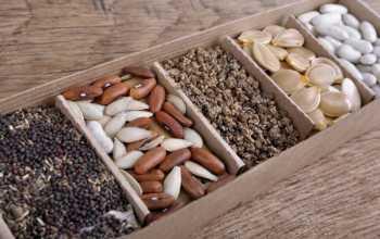 5 удобнейших вариантов хранения семян
