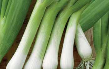 Рекомендации по выращиванию лука-батуна