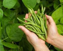 Июльские посадки: второй урожай к осени