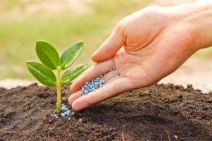 Народные рецепты против огородных вредителей