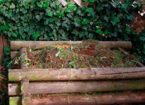 Как использовать осенние листья