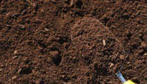 Глинистая почва: достоинства и недостатки