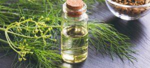 Выращивание и полезные свойства фенхеля