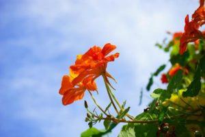 Рецепты приготовления растений