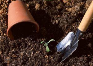 Овощи: выращивание в контейнерах