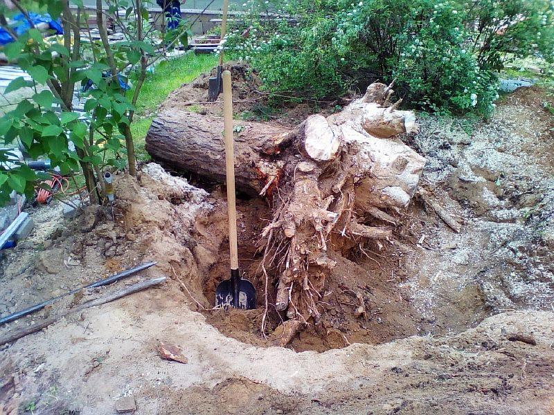Как навсегда избавиться от корней в огороде не спиливая деревья