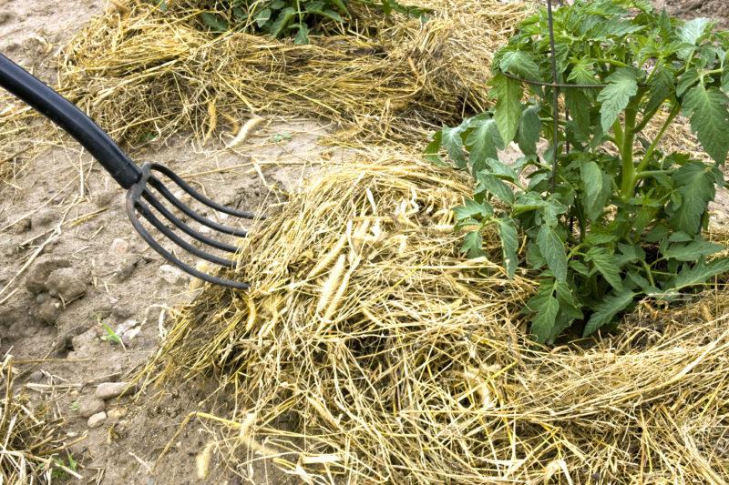 Как мне удалось избавиться от мокрицы в огороде: личный опыт