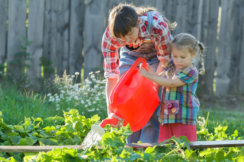 Полив огурцов - как получить богатый и вкусный урожай