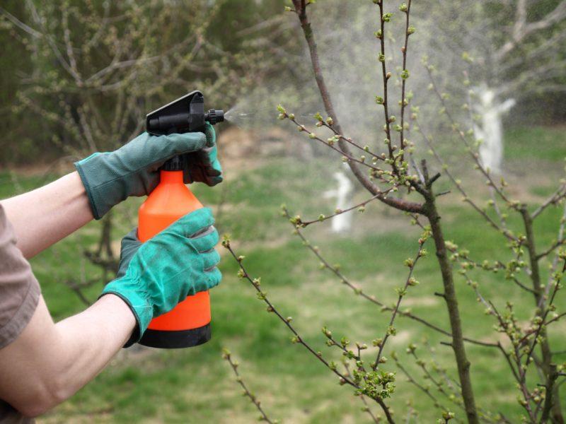 Опрыскивание сада ранней весной – чем обрабатывать растения?