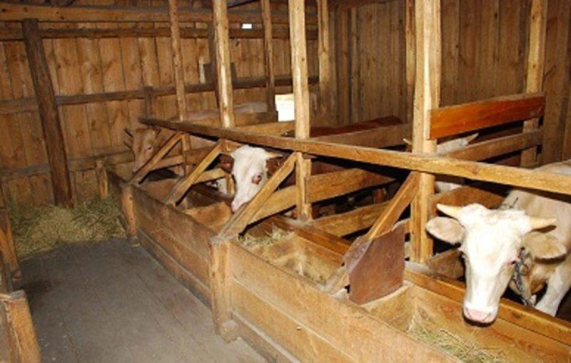 Сарай для коров – как сделать его сухим, теплым и долговечным?