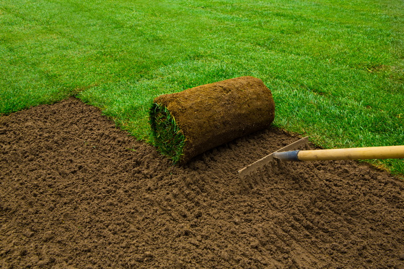 Какая газонная трава вытесняет сорняки