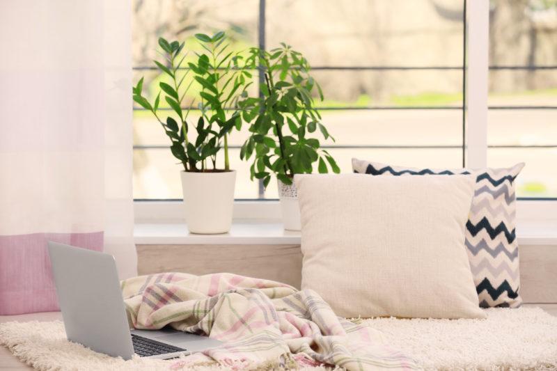 Замиокулькас - выращивание и уход