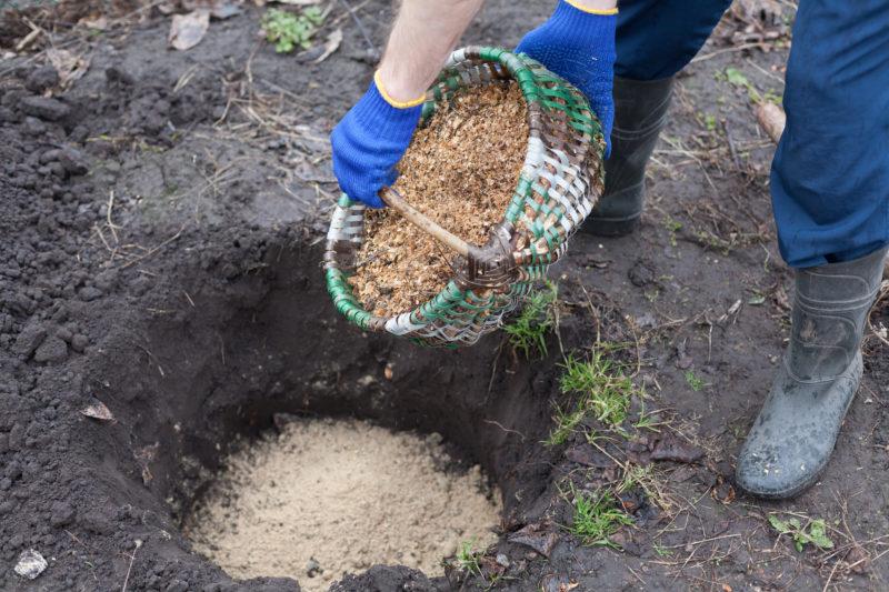 Какие удобрения нужно вносить весной – все про внесение удобрений