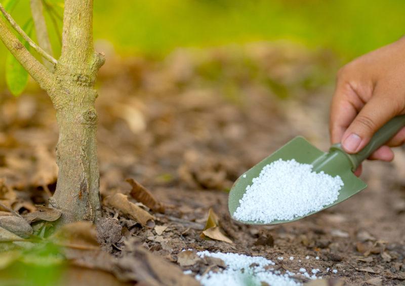 Мочевина – удобрение и защита для сада и огорода