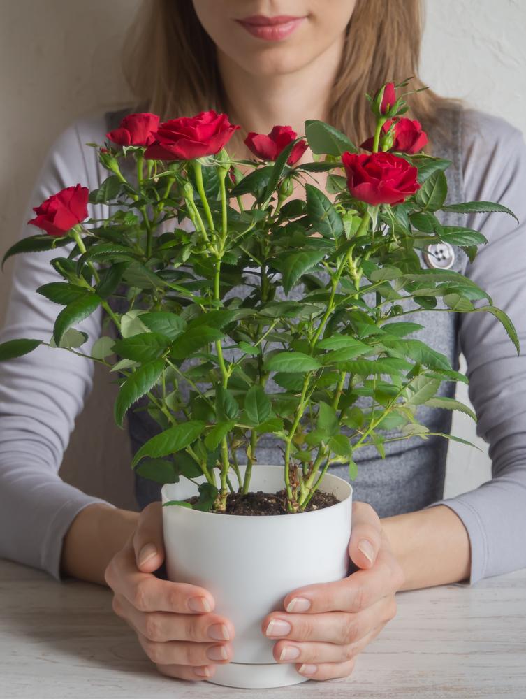 Подкормка золой: готовим настой для ухода за комнатными растениями