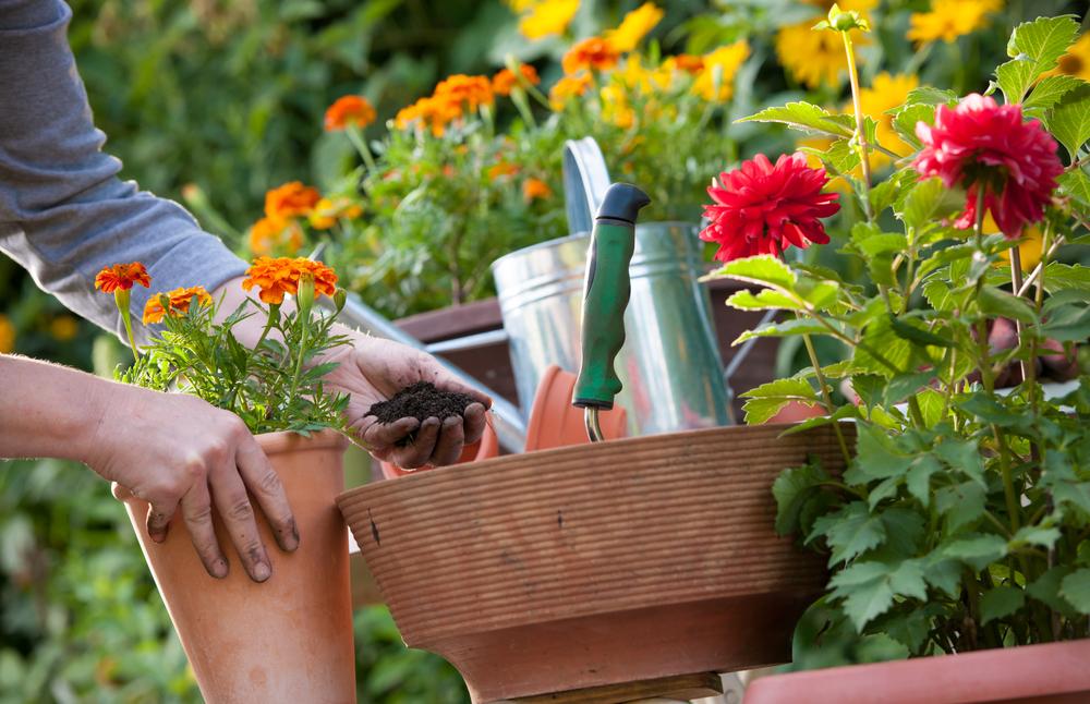Декоративные растения, названия цветов