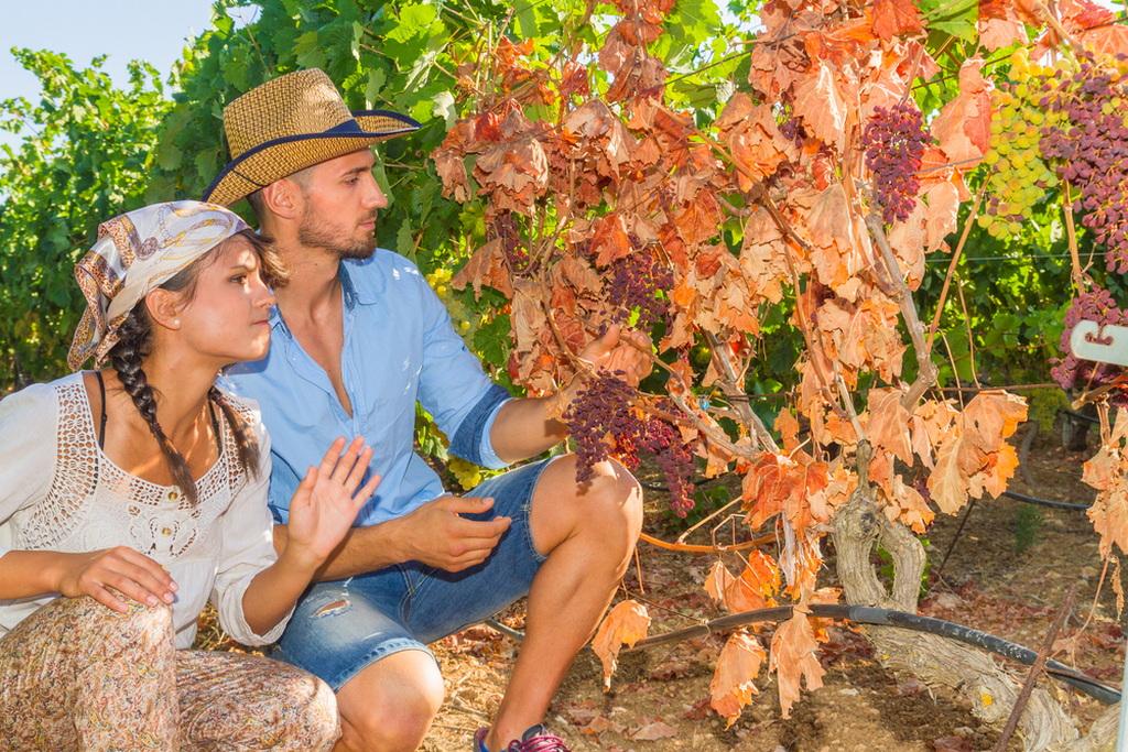 Оидиум винограда – эффективные меры борьбы с заболеванием