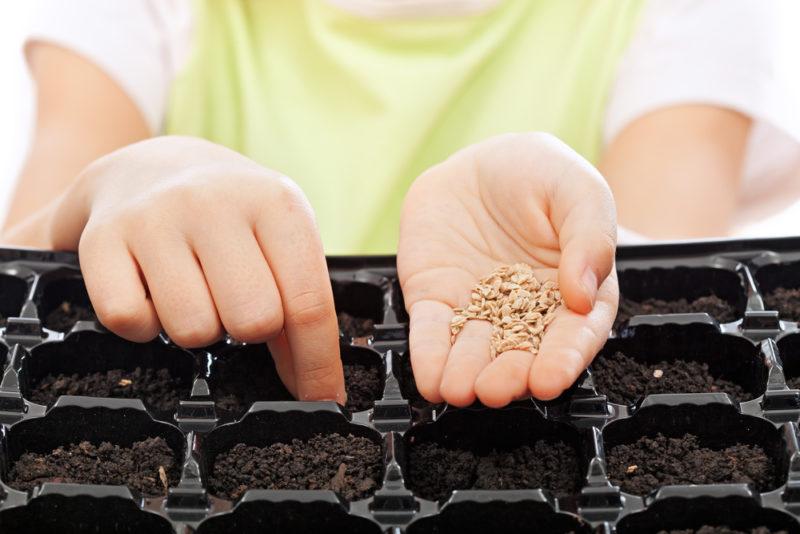 Почему я не поливаю водой семена после посева. И вам не советую этого делать