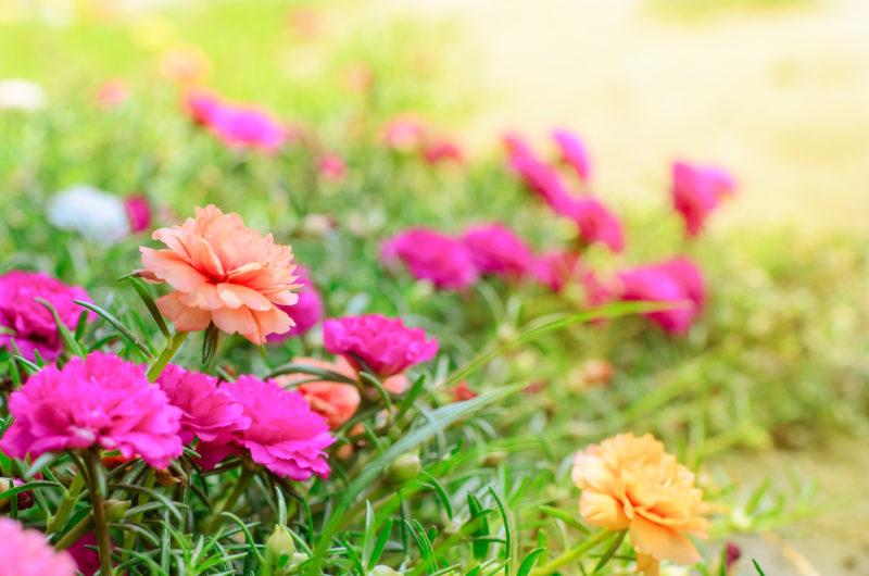 Однолетние цветы для клумбы, или как сделать клумбу яркой
