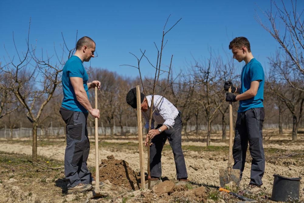 Подкормка деревьев весной - изучаем правила внесения удобрения