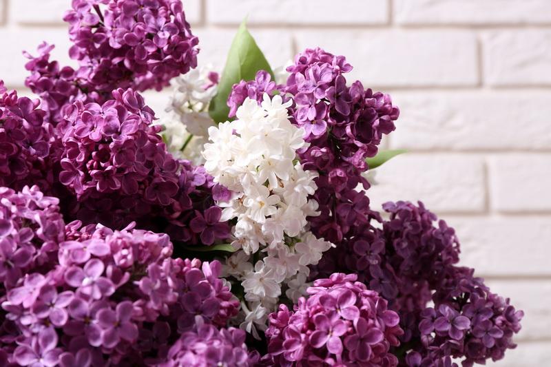 Цветущие декоративные кустарники - вносим разнообразие в садовый дизайн