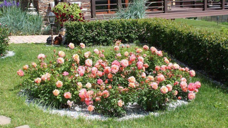 Оформление клумбы с розами - оригинальный цветник своими руками