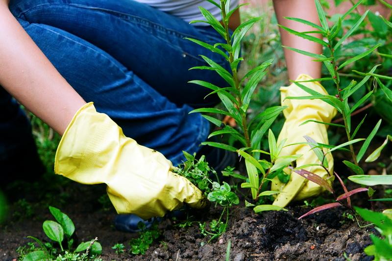 Как избавиться от сорняков на участке навсегда