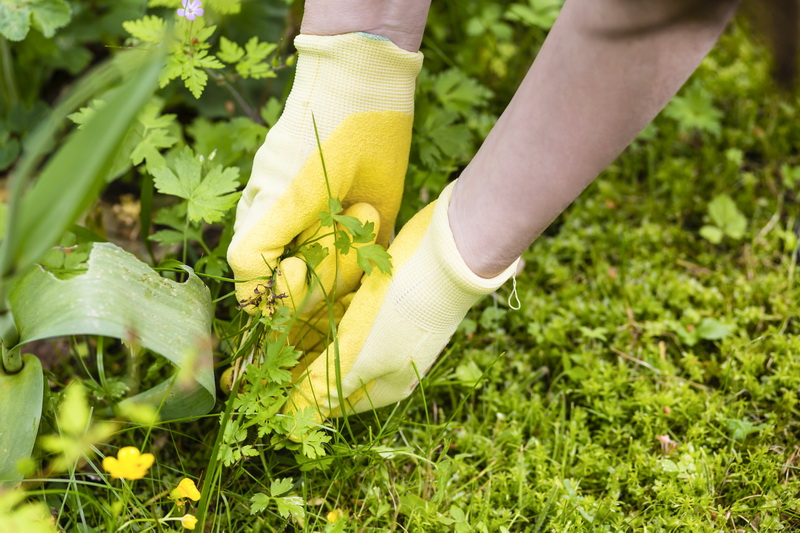 Гербициды от сорняков - борьба за чистый огород