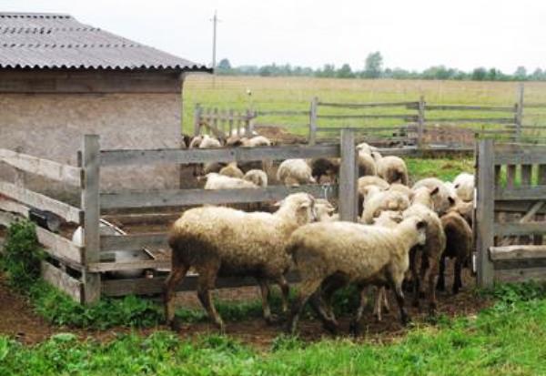 Как построить сарай для овец своими руками