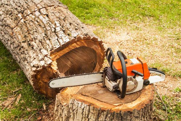 Как правильно спилить дерево бензопилой - безопасно и эффективно