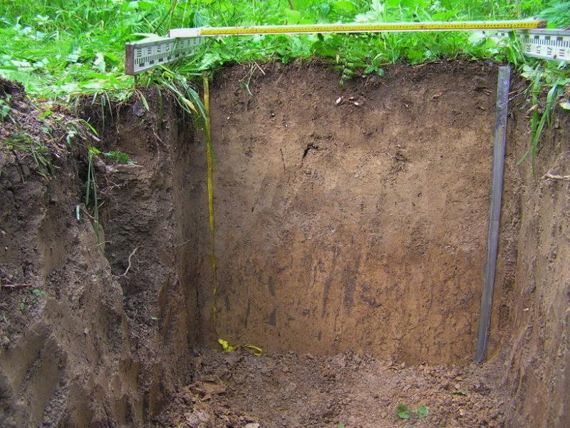 Дерново-подзолистые почвы - головная боль дачника