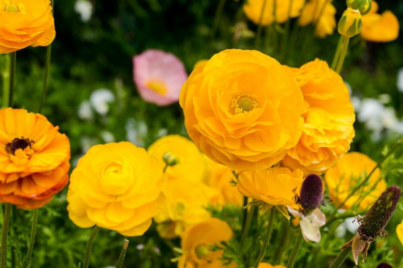 Многолетние цветы для дачи - выбор за вами
