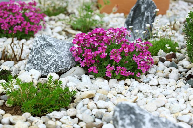 Альпийская горка своими руками - гармония камней и растений